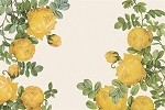 Yellow Rose Placemats