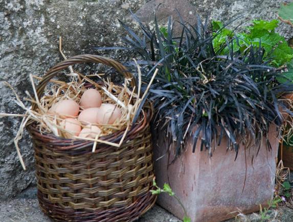info pour cdb19 e6333 Willow Blackberry Picking Basket